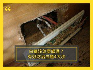 白蟻該怎麼處理?有效防治白蟻4大步