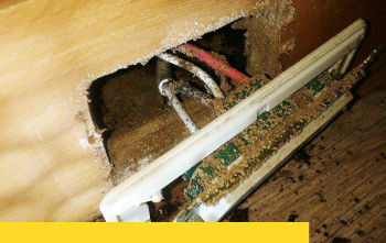 家裡出現白蟻該怎麼辦?預防白蟻4大步驟