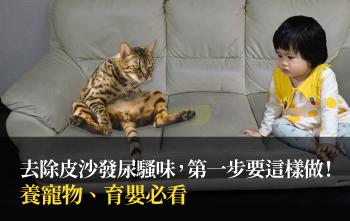 養寵物、育嬰必看,去除皮沙發尿騷味,第一步要這樣做!